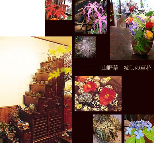 山野草 癒しの草花