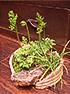 山野草盆栽3