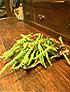 山野草盆栽7