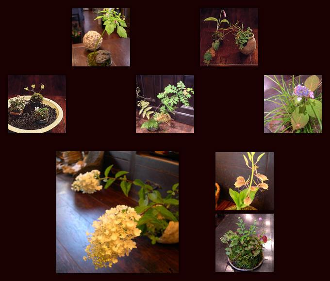 山野草盆栽