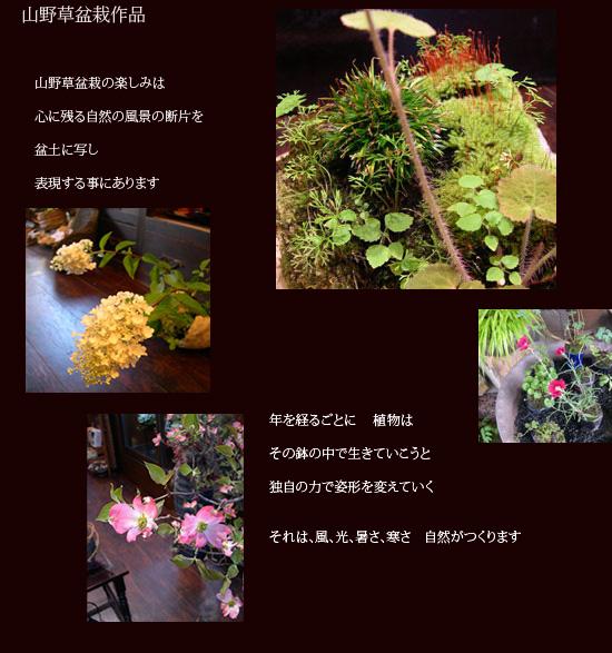 30山野草盆栽